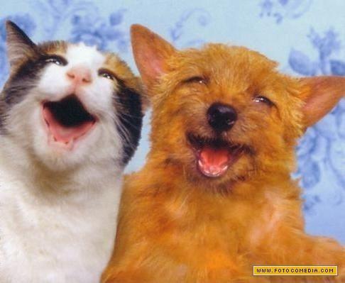 gato-e-cachorro-rindo_1
