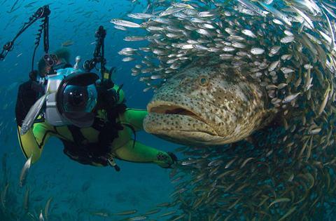 30 melhores fotos da National Geographic