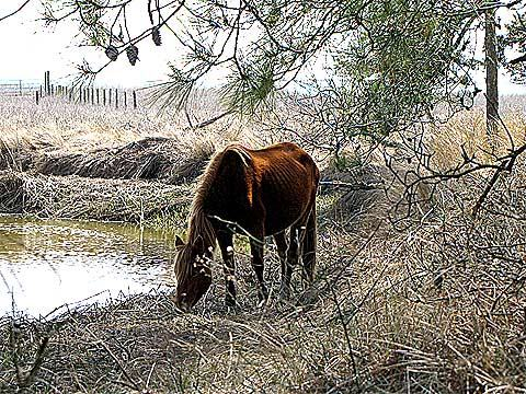 cavalo-horse