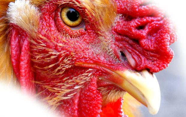 Rogério Ceni: frangos admiráveis na carreira de sucesso