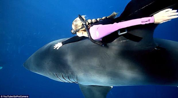 Modelo Ocean Ramsey mergulha sem proteção ao lado de tubarões