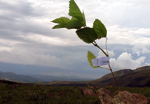 campanha+contra+desmatamento+serra+gandalera-03