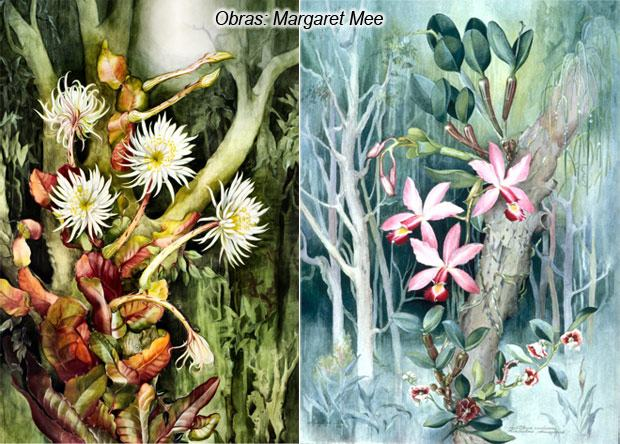 Ilustração Científica – a ciência ilustrada apresentando Margaret Mee