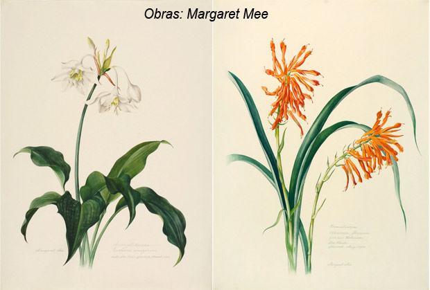 margaret+mee+ilustracao+cientifica-06-01