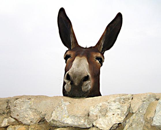 asno-donkey-cagadas-da-vida