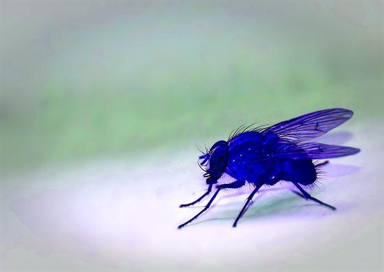 mosca-azul-machado-de-assis-1