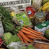 Acontece na Marina da Glória a 5ª edição do Green Rio