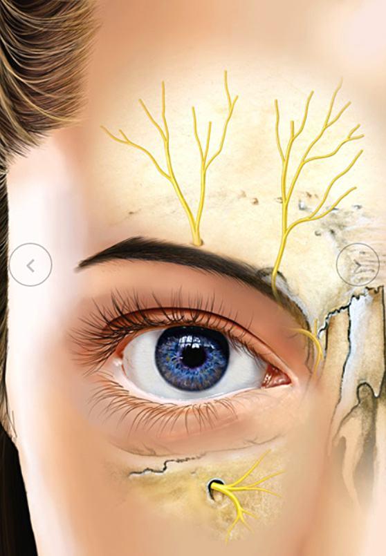 tecnicas-cirurgicas-ilustradas-iriam-gomes-starling-3
