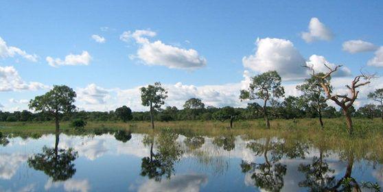 Conheça as atrações e passeios que você pode fazer em sua primeira visita ao Pantanal