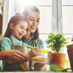 Dicas para cuidar de suas flores e plantas